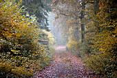 November atmosphere in beech woods