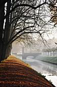 November atmosphere under horse chestnut trees