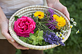 Basket of flowers and herbs held in hands