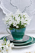White harebells in green cup