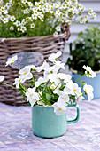 White violas in pale blue enamel mug