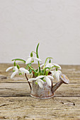 Posy of snowdrops in tiny watering can ornament