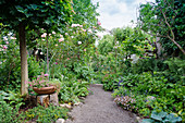 Gravel path between beds with perennials and roses