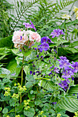 Purple cranesbill with lady's mantle and apricot-colored rose