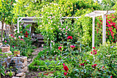 Rose garden with climbing roses on pergola
