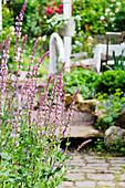 Purple-flowering salvia in garden