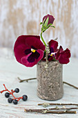 Violas in small stoneware vase