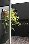 Staghorn fern in shower with black wall and pebble mosaic floor