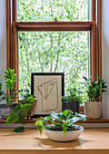 Abstract picture and various green plants in front of wooden frame window