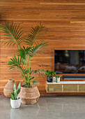 Flat screen TV above wall cabinet next to palm tree against wooden wall