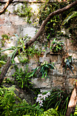 Overgrown garden wall in a natural garden