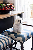 Dog on blue and white upholstered stool with turned legs