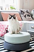 Katze auf Sitzpouf dahinter graues Sofa mit Katzenmotiv-Kissen