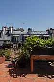 Potted plants and raised bed on roof terrace of city apartment