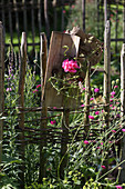 Geranium in small glass vase on wooden board decorating summer garden