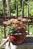 Decoratively planted container in summery cottage garden