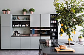 Pale grey kitchen cabinets and charcoal-grey island counter with lemon tree planted in centre