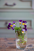Viola in glass of water