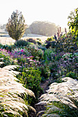 Morning light in the near-natural garden with perennials