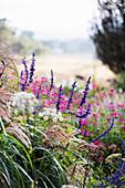 Flowering perennials in a natural summer garden
