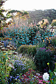Flowering perennials in a natural summer garden