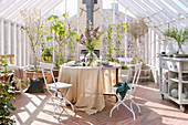 Set table in sunny greenhouse