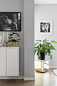 Houseplants on sideboard and on golden cube against grey walls