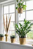 Zimmerpflanzen in goldenen Übertopfen am Sprossenfenster