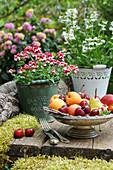 Bowl of summer fruits on wooden bench outside