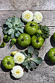 White pompom dahlias, green tomatoes and houseleeks on wooden surface
