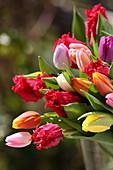 Gefiederte und einfache bunte Tulpen im Strauß