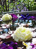 Wassertrog mit schwimmenden Blüten aus Stiefmütterchen, Hornveilchen und Schneeball