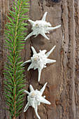 Dried Edelweiss flowers on wooden surface