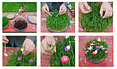 Instructions for making a flowering meadow in a dish