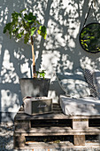 Retro radio and small fig tree on pallet sofa in garden