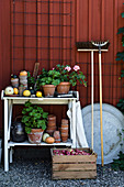 Geraniums in terracotta pots on potting table against Falu-red façade