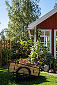 Apple harvest in handcart in front of Scandinavian-style summerhouse