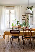 Esstisch mit verschiedenen Stühlen, im Hintergrund Zimmerpflanze vor Fenster