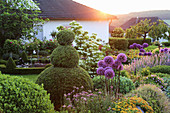 Topiary box and alliums in garden