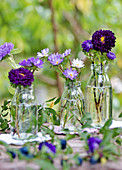 Purple summer asters in bottles