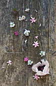 Flowers on wooden board
