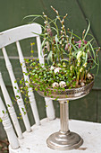 Wire vine, grape hyacinths and snake's head fritillaries in confectionary dish