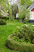 Flower bed edged by box hedge in lawn of rustic garden