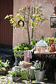 Flowers, plants and vintage accessories in courtyard