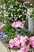 Hydrangeas, lavender, elderberries and forget-me-nots