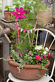 Cosmea, busy Lizzies and miniature bunting arranged in terracotta bowl