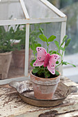 Pea seedling in terracotta pot with handmade pink butterfly decoration