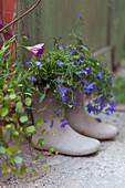 Grey wellington boots planted with lobelia