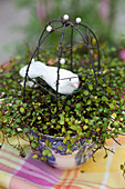 Handmade wire birdcage and bird ornament in pot of wire vine