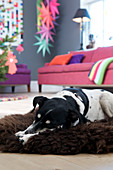 Dog lies on brown sheepskin in the colorful living room